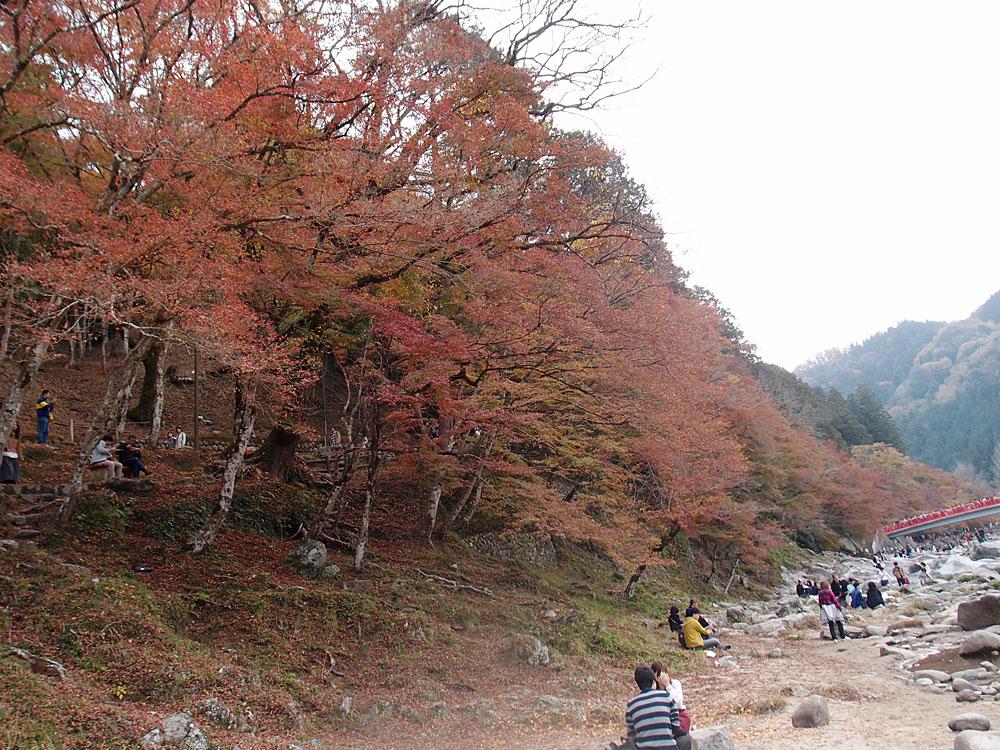 2015.11.22 香嵐渓_f0250322_2135064.jpg