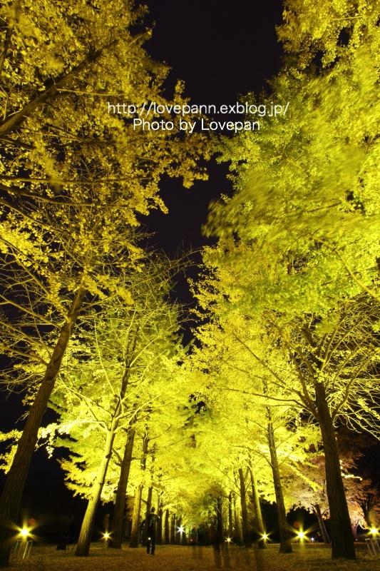 銀杏並木のライトアップ_c0136926_935322.jpg