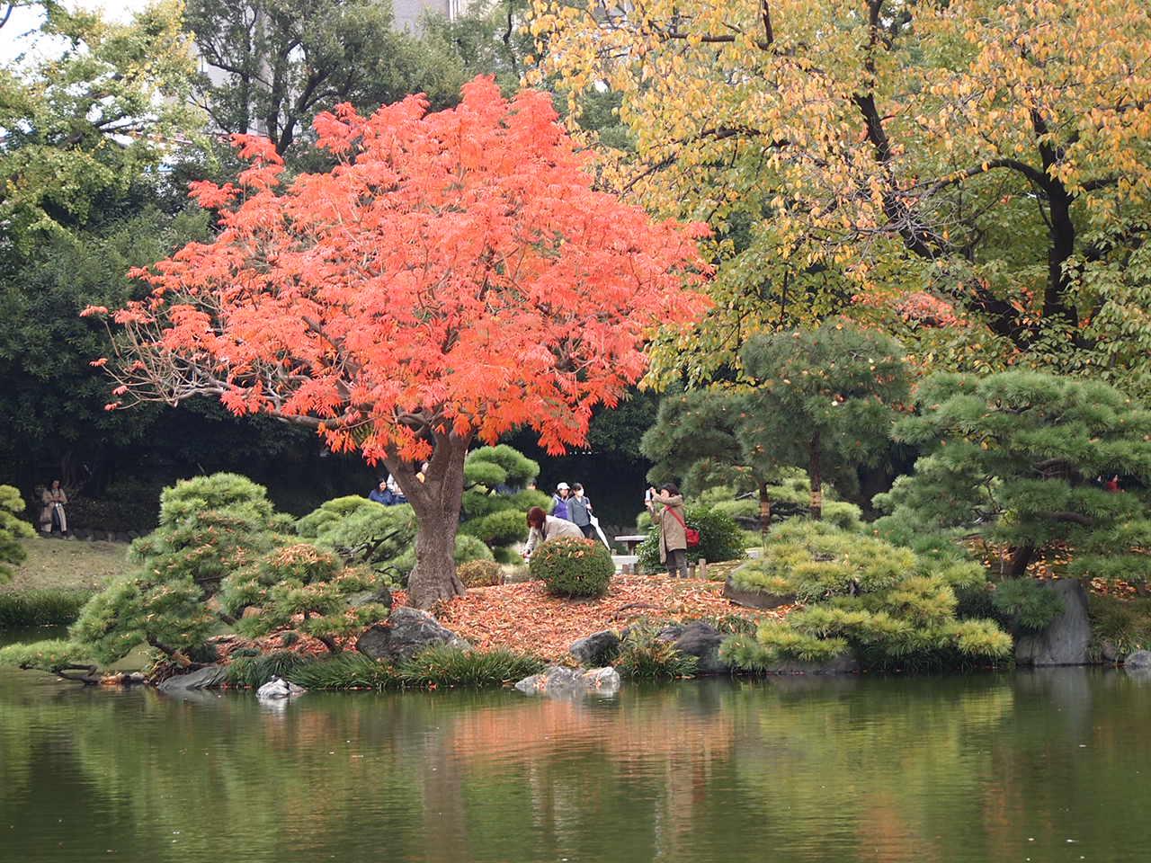 ポツリポツリ小雨降る清澄庭園散策_a0214329_21422018.jpg