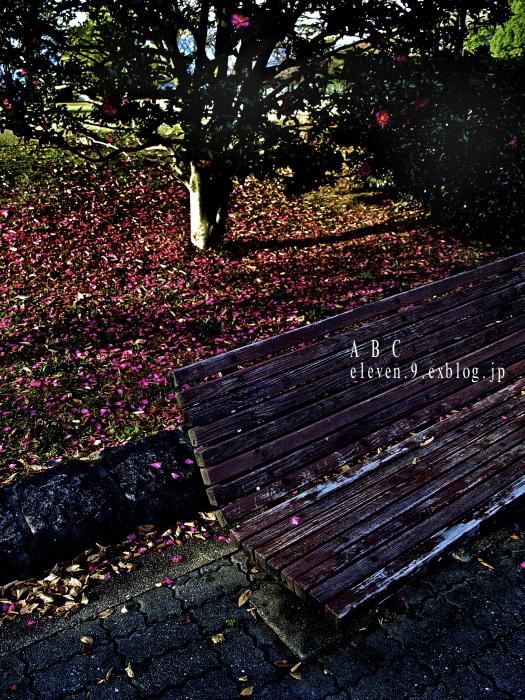 秋は深まり 冬が近づく_f0315034_13064182.jpg