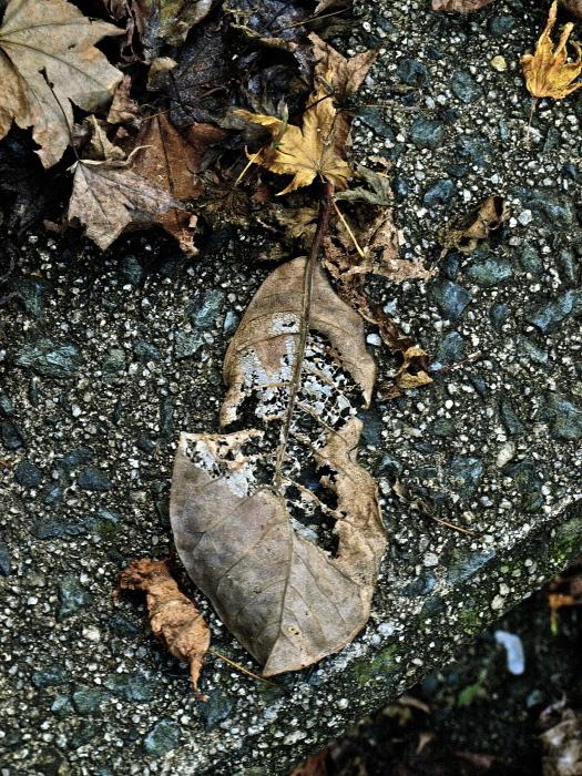 秋は深まり 冬が近づく_f0315034_13203550.jpg