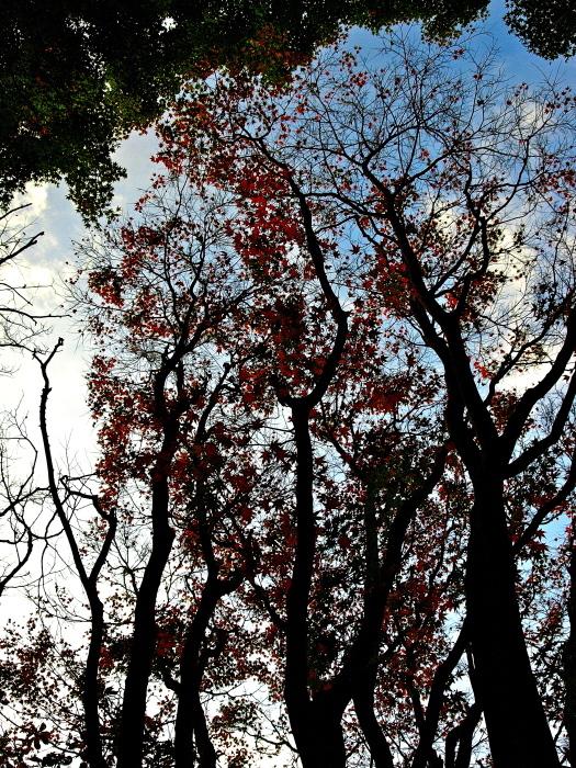 秋は深まり 冬が近づく_f0315034_13210444.jpg
