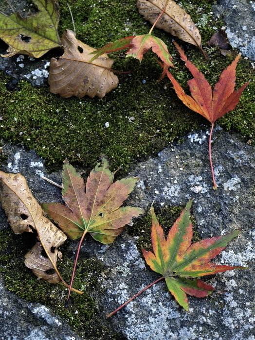 秋は深まり 冬が近づく_f0315034_13213567.jpg