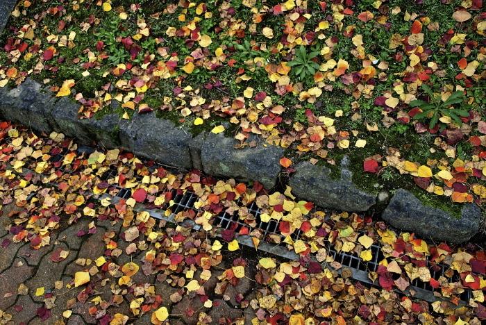 秋は深まり 冬が近づく_f0315034_13220566.jpg