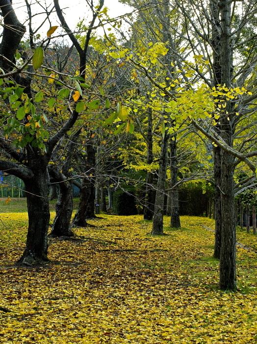 秋は深まり 冬が近づく_f0315034_13223519.jpg