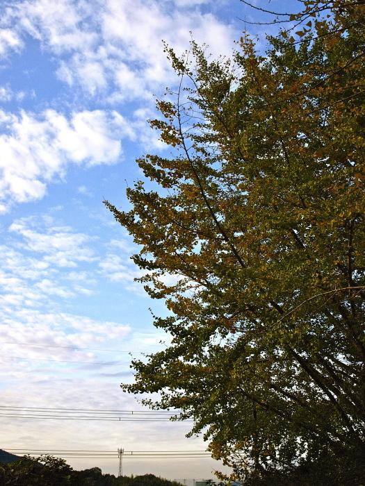 秋は深まり 冬が近づく_f0315034_13233733.jpg