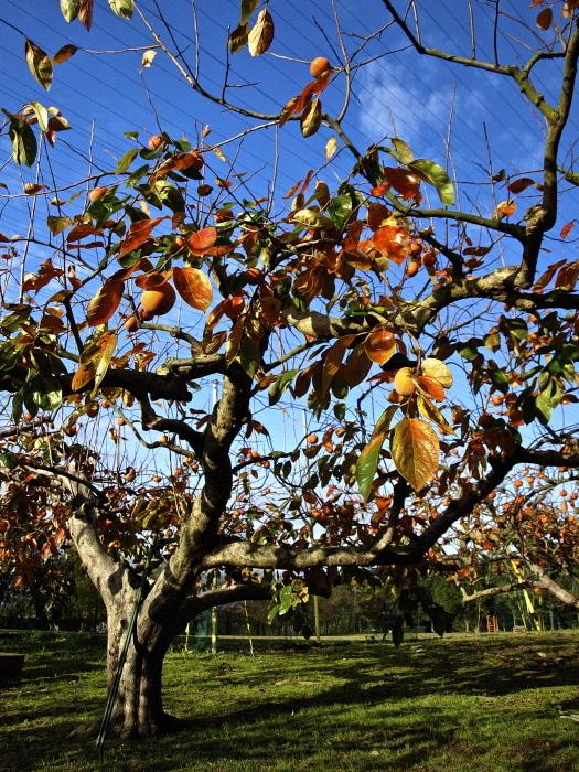 秋は深まり 冬が近づく_f0315034_14233333.jpg