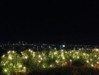 11月、東京での(ワーク以外の)写真(^^)_c0196240_01082751.jpg
