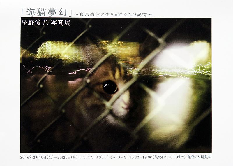 「海猫夢幻」~東京湾岸に生きる猫たちの記憶~_c0194541_1447051.jpg