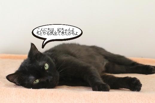 黒猫さんの変化_e0151545_21544042.jpg