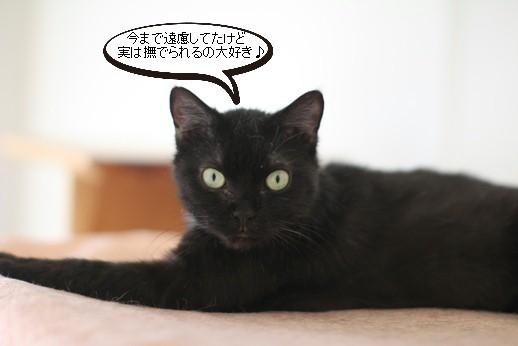 黒猫さんの変化_e0151545_21545397.jpg