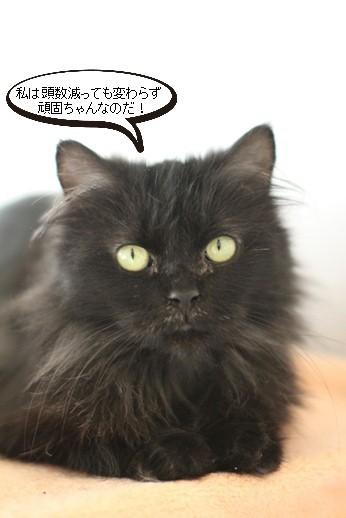 黒猫さんの変化_e0151545_21550318.jpg