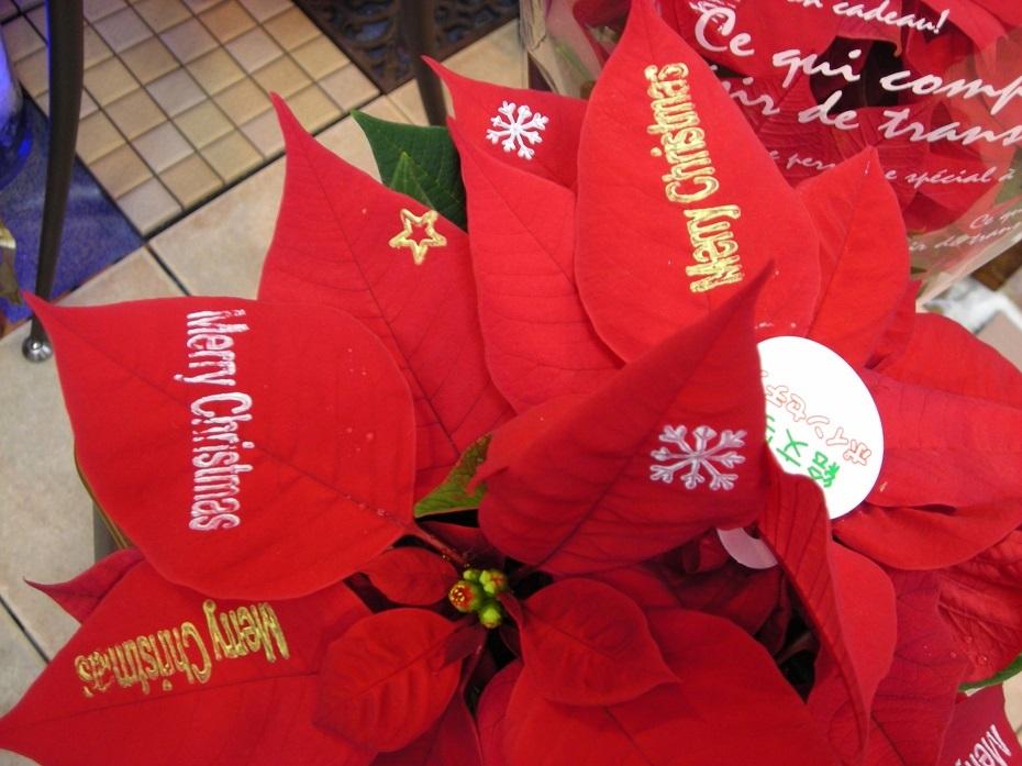 スタンプ付ポインセチア 1851円(税込2000-)と、クリスマスに贈る、短いメッセージ。_b0344880_14592880.jpg