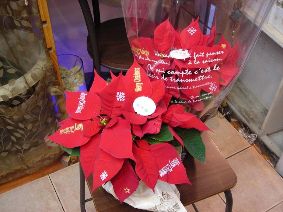 スタンプ付ポインセチア 1851円(税込2000-)と、クリスマスに贈る、短いメッセージ。_b0344880_14594251.jpg