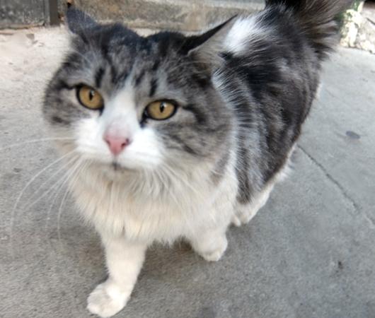 猫がお店番するチャイナタウンの八百屋さん_b0007805_6263146.jpg