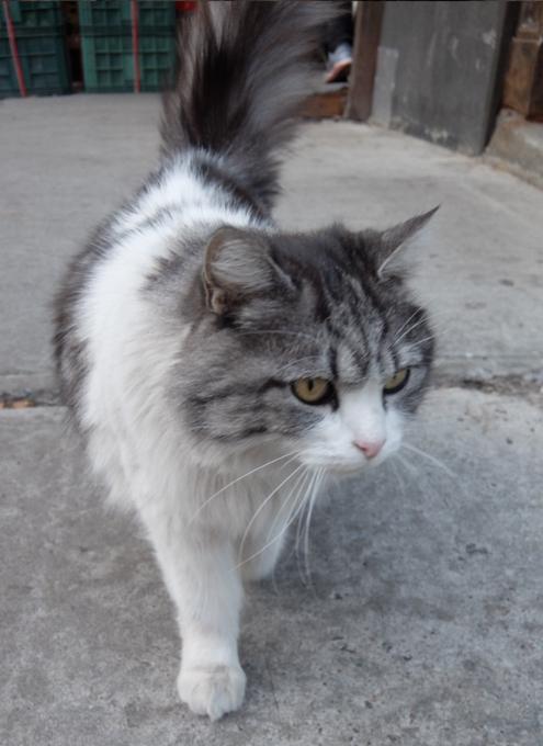 猫がお店番するチャイナタウンの八百屋さん_b0007805_6264186.jpg