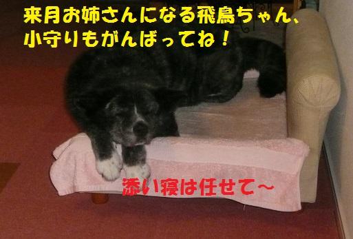 f0121712_764057.jpg