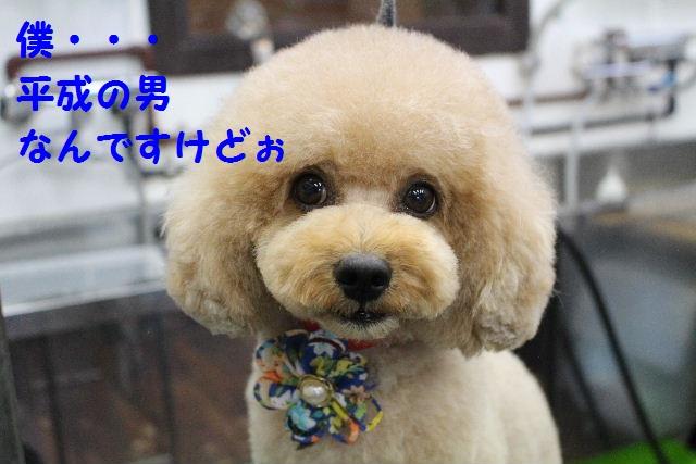 b0130018_0223286.jpg