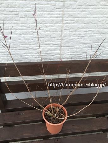 庭に新しくお迎えした木_d0291758_2239737.jpg