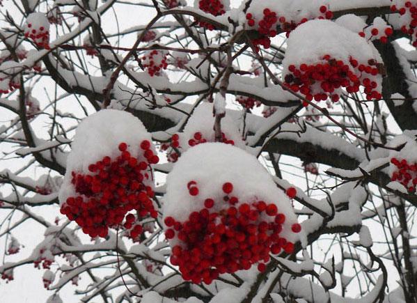 大雪_d0162994_13392478.jpg