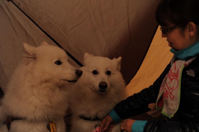 秋サモキャンプ in西湖 part2_a0049296_18362270.jpg