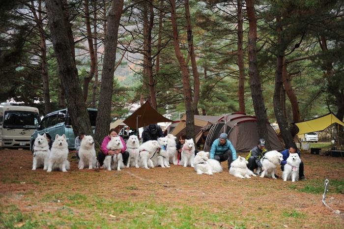秋サモキャンプ in西湖 part2_a0049296_18372827.jpg