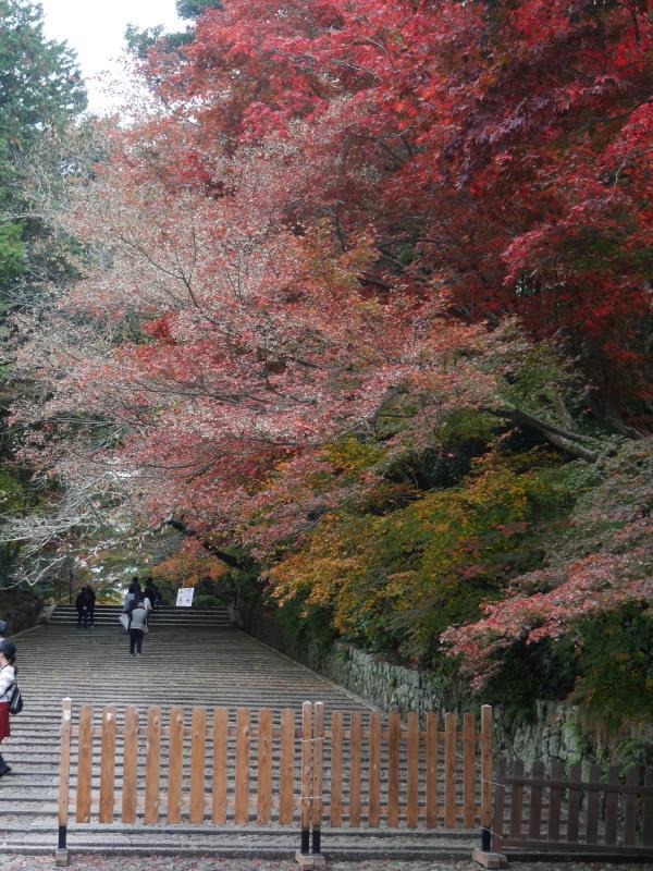 京都紅葉巡り1(光明寺)_c0360399_21543731.jpg