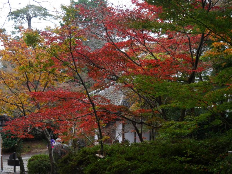 京都紅葉巡り1(光明寺)_c0360399_21544766.jpg