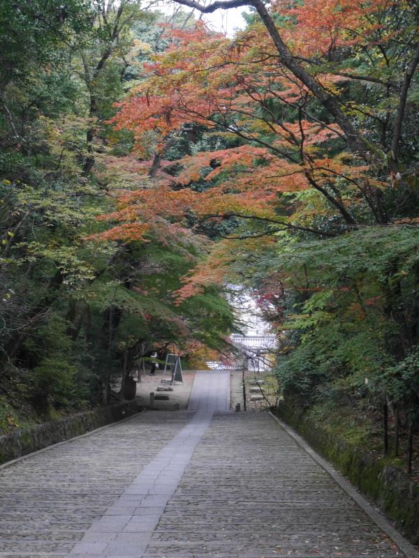 京都紅葉巡り1(光明寺)_c0360399_2155957.jpg