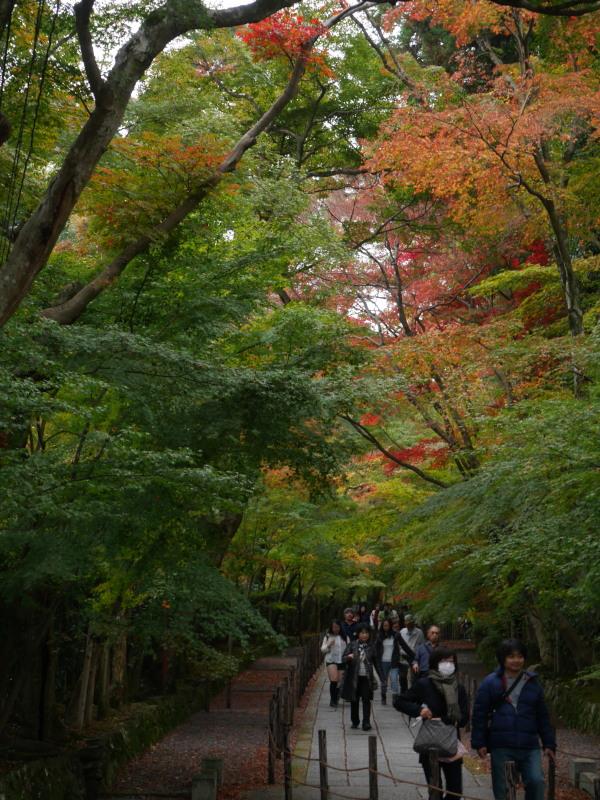京都紅葉巡り1(光明寺)_c0360399_2231486.jpg
