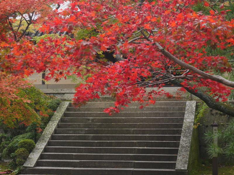 京都紅葉巡り1(光明寺)_c0360399_223691.jpg