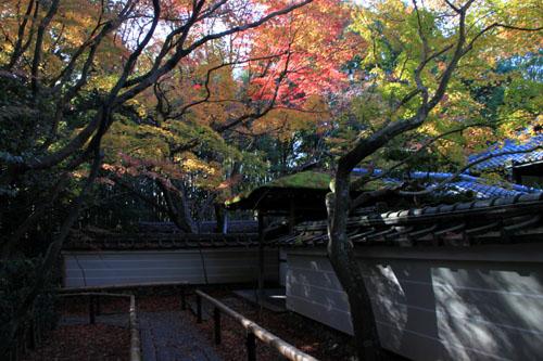 紅葉だより39 高桐院_e0048413_20235621.jpg