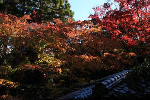 紅葉だより39 高桐院_e0048413_20241098.jpg