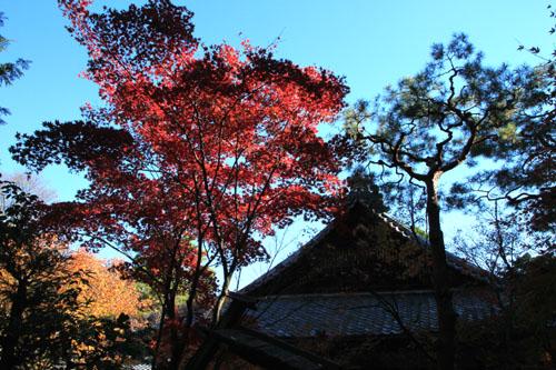 紅葉だより39 高桐院_e0048413_20245916.jpg