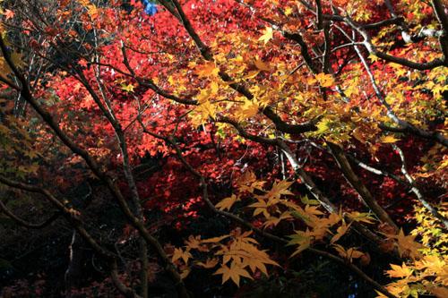 紅葉だより39 高桐院_e0048413_20251048.jpg