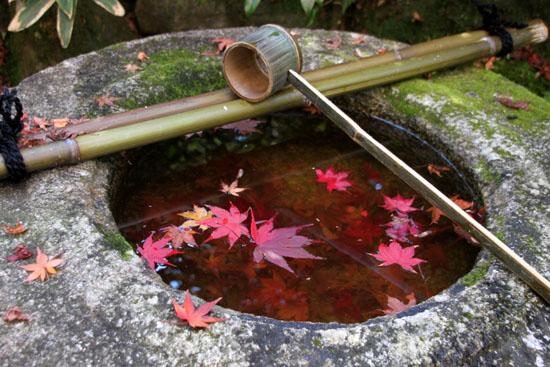 紅葉だより39 高桐院_e0048413_20252054.jpg