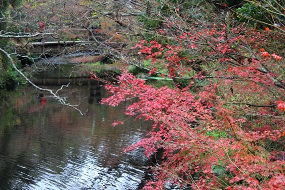 晩秋の湯布院、金鱗湖、紅葉、ギャラリー「風和里」etc_a0329820_16093399.jpg