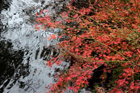 晩秋の湯布院、金鱗湖、紅葉、ギャラリー「風和里」etc_a0329820_16093682.jpg