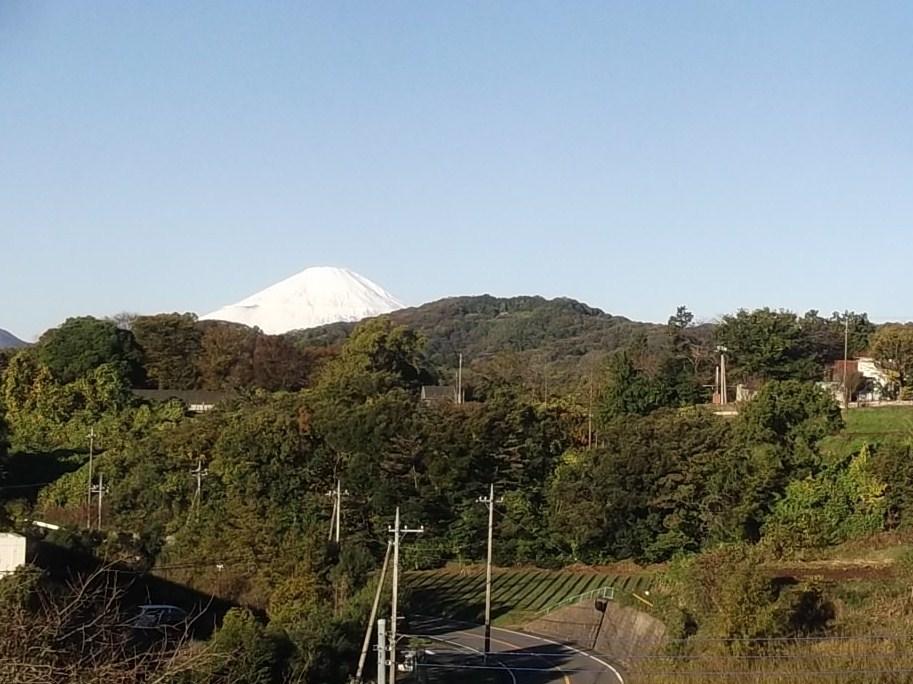 みかん刈り..冠雪富士です。_b0137932_1829374.jpg