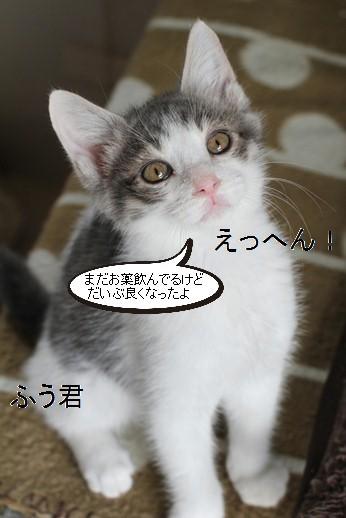 仔猫さん達の様子_e0151545_21181870.jpg