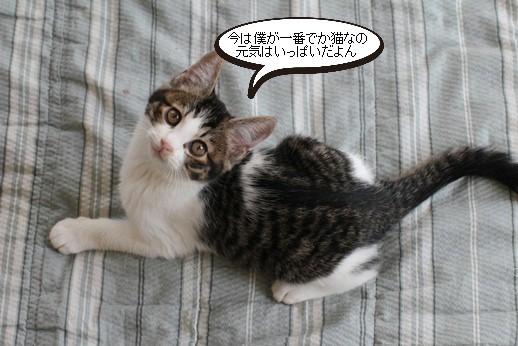 仔猫さん達の様子_e0151545_21182962.jpg