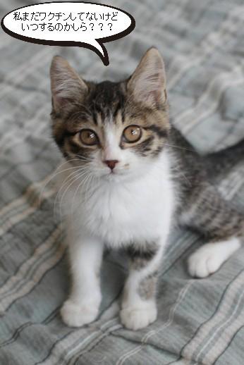 仔猫さん達の様子_e0151545_21184411.jpg