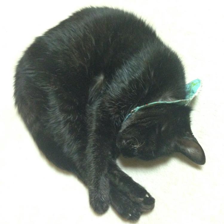 ネコはコタツで丸くなる_c0185356_08380845.jpg