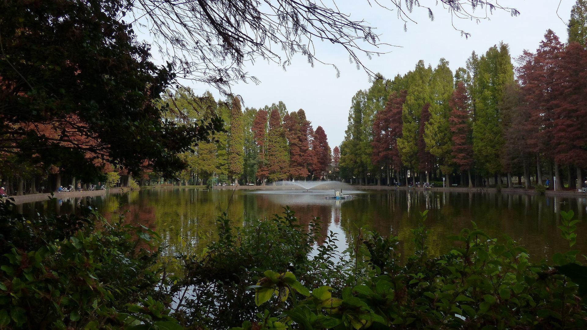 秋色の金黒羽白鴨_a0185081_1450799.jpg