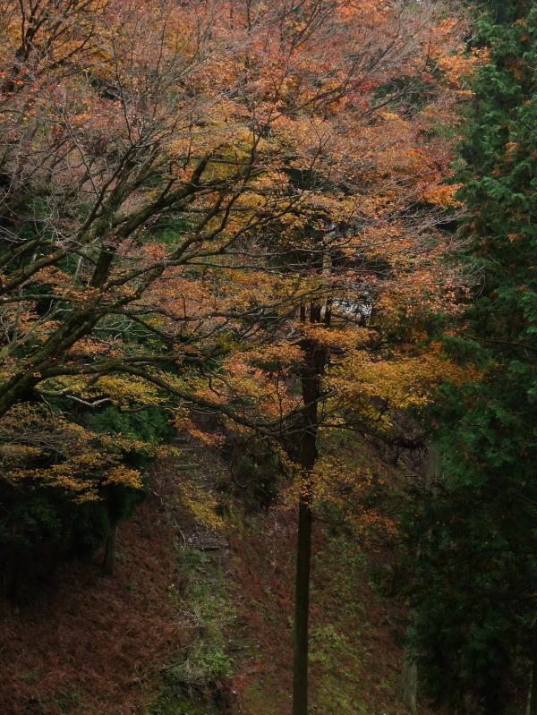京都紅葉巡り2(比叡山)_c0360399_13204843.jpg