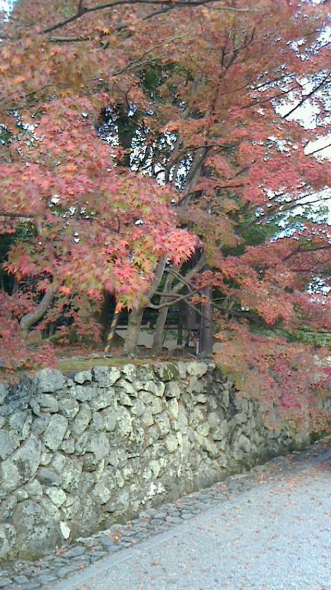 京都近郊紅葉巡り3(石山寺・天竜寺)_c0360399_18134782.jpg