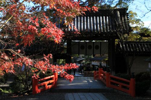 紅葉だより40 今宮神社_e0048413_21132213.jpg