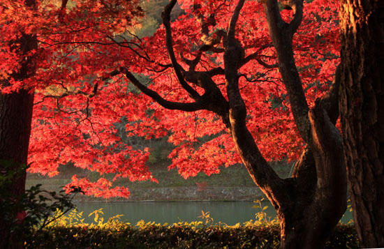 紅葉だより42 嵐山_e0048413_22491458.jpg