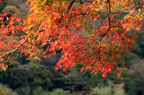 紅葉だより42 嵐山_e0048413_22492569.jpg