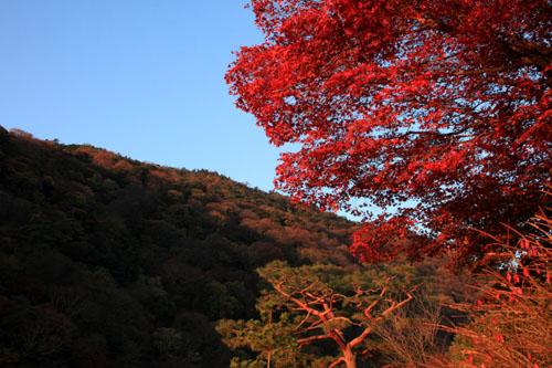 紅葉だより42 嵐山_e0048413_22493549.jpg